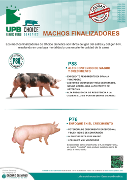 Verracos finalizadores CHOICE GENETICS - UPB Genetic World
