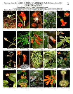 GESNERIACEAE - Field Guides