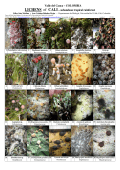 COLOMBIA LICHENS of CALI– subandean tropical - Field Guides