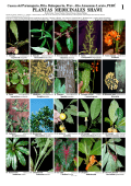PLANTAS MEDICINALES SHAWI - Field Guides - The Field Museum