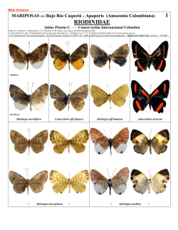 RIODINIDAE - Field Guides - The Field Museum