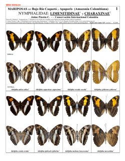 NYMPHALIDAE: LIMENITIDINAE1 y CHARAXINAE2 - Field Guides