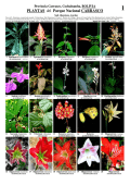 PLANTAS del Parque Nacional CARRASCO - Field Guides - The