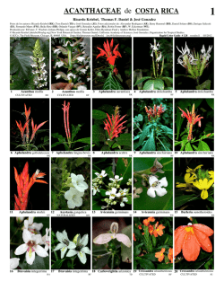 ACANTHACEAE de COSTA RICA - Field Guides - The Field Museum