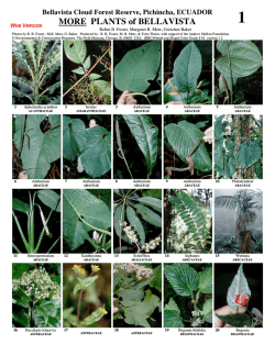 MORE PLANTS of BELLAVISTA - Field Guides - The Field Museum