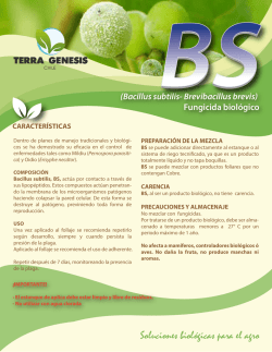 ficha BS carta WEB