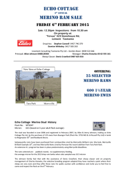 ECHO COTTAGE MERINO RAM SALE