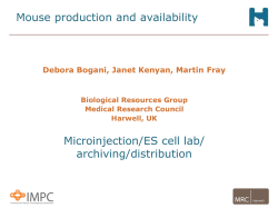 Mouse production - Martin Fray - MRC Harwell
