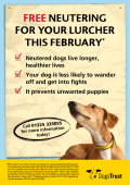 FREE NEUTERING FOR YOUR LURCHER THIS FEBRUARY*