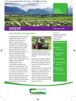 sheep - Teagasc