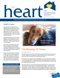 The Blessings Of Threes - Homeward Bound Golden Retriever Rescue