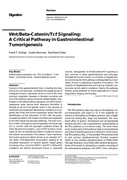 Wnt/Beta-Catenin/Tcf Signaling: A Critical Pathway in