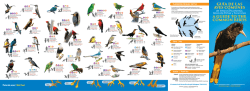 GUÍA DE LAS AVES COMUNES A GUIDE TO THE COMMON BIRDS
