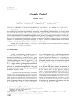 ¿Músculo Plantar? - International Journal of Morphology