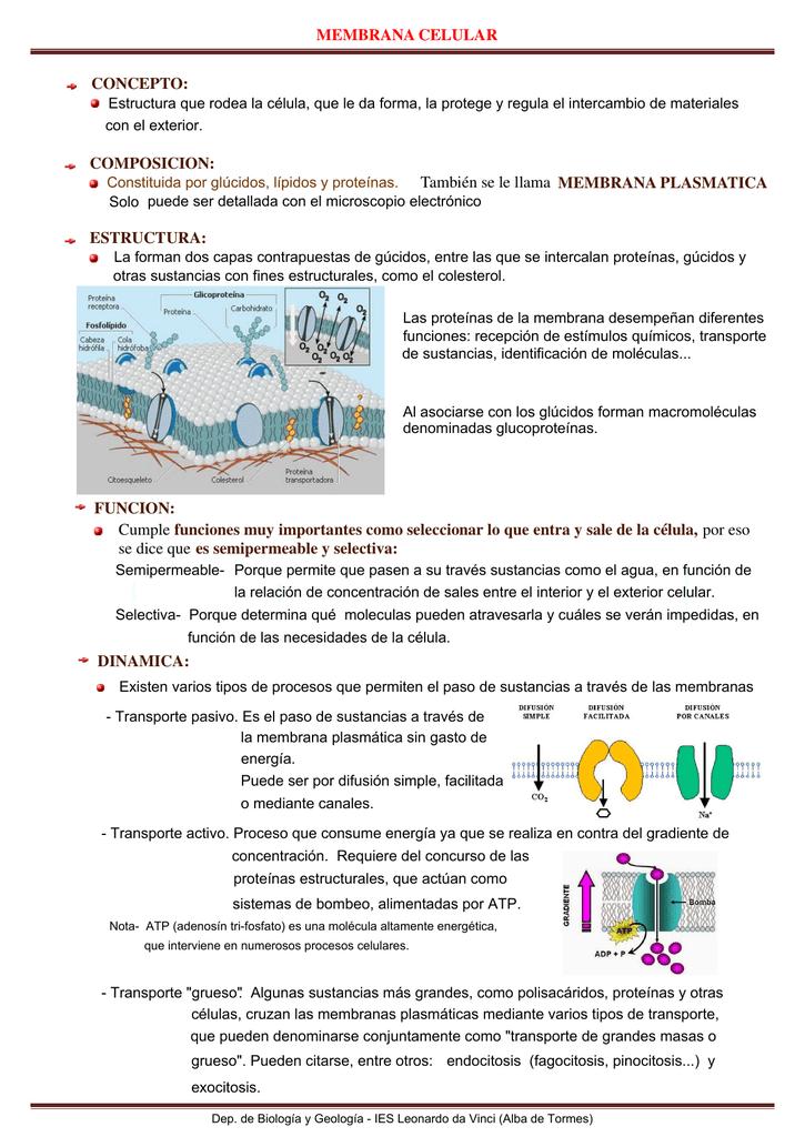Membrana Celular Concepto Composicion También Se